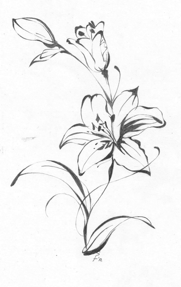 lily flower drawing lily flower clipart clipartsco flower lily drawing