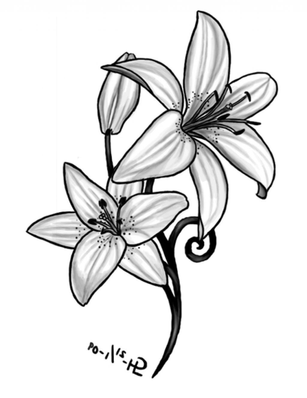 lily flower drawing lily flower drawing illustration black white line art drawing lily flower