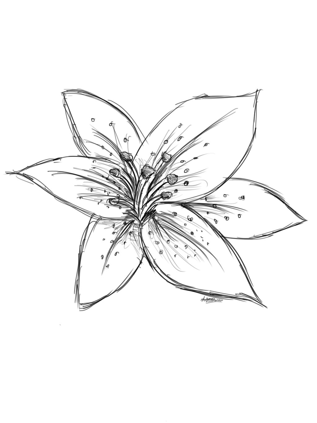 lily flower drawing lily flower drawing illustration stock vector suwi19 drawing flower lily