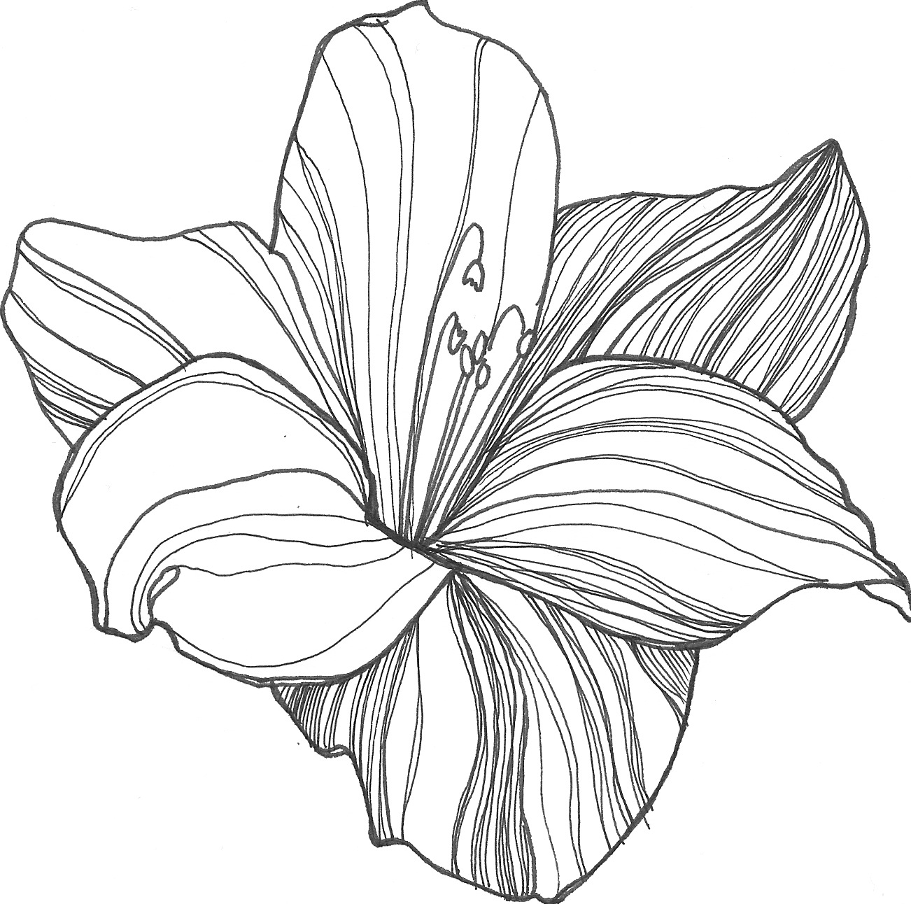 lily flower drawing lily flower tattoo drawing at getdrawings free download lily flower drawing