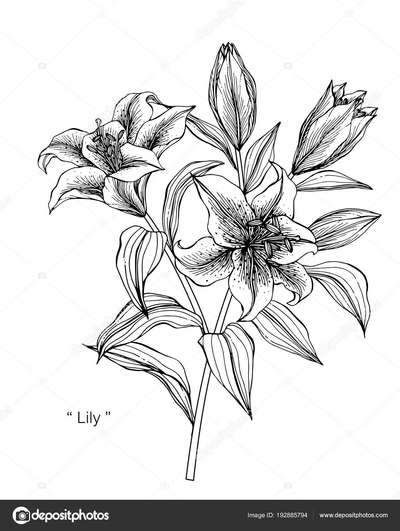 lily flower drawing pin by janelle elena on ink lilies drawing lily flower drawing flower lily