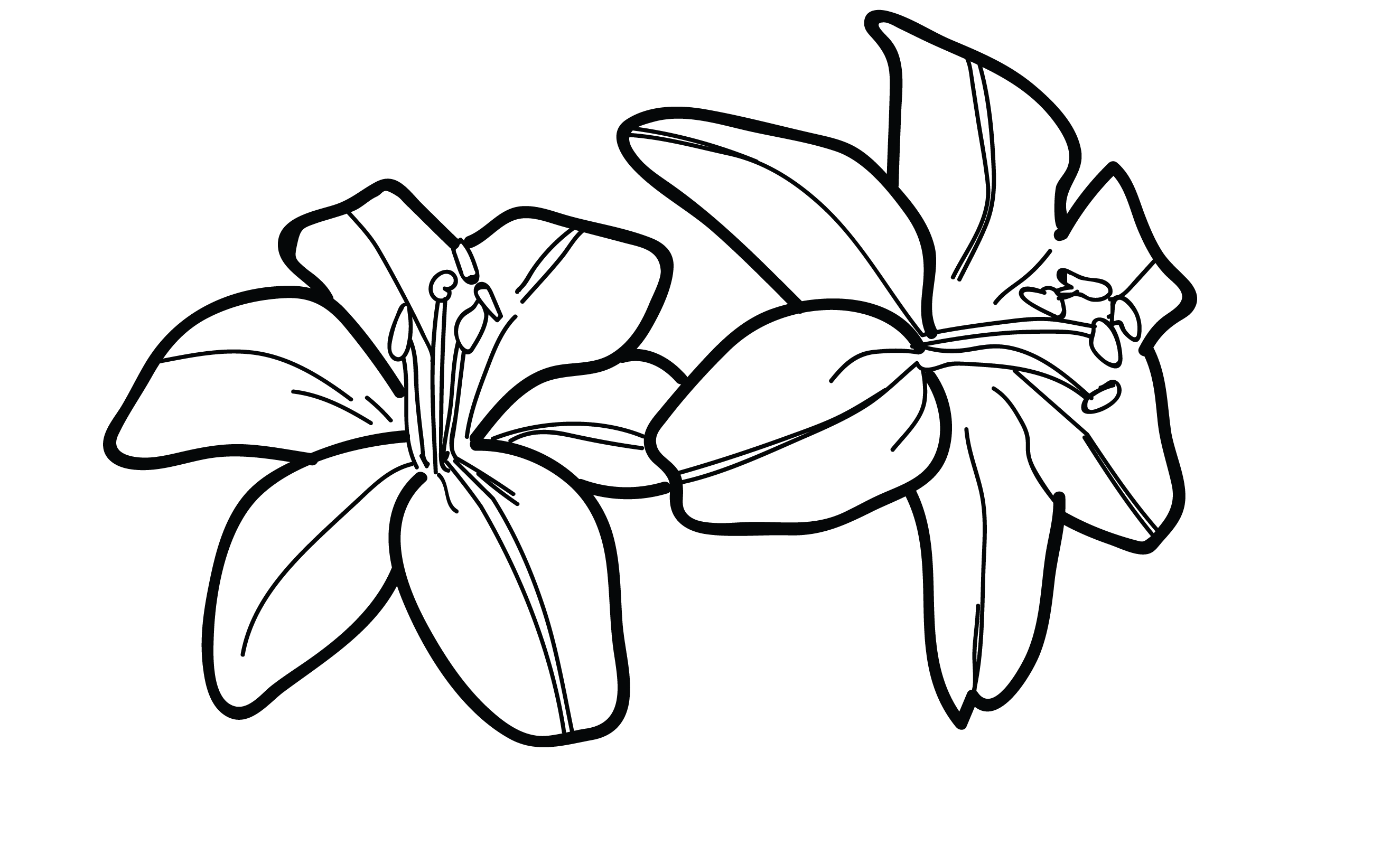 lily flower drawing simple lily drawing at getdrawings free download lily flower drawing
