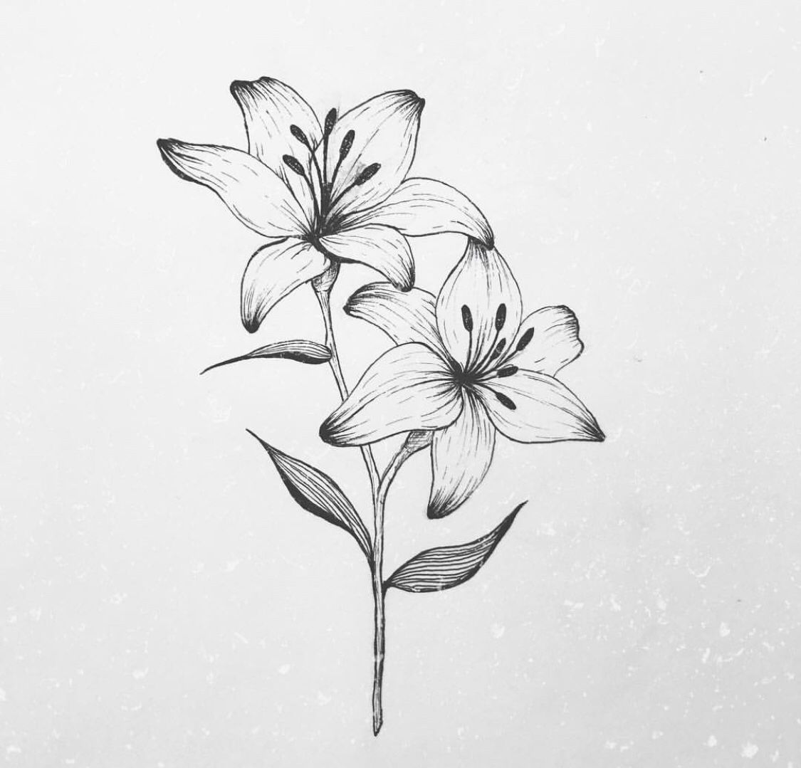 lily flower drawing tiger lily flower drawing at getdrawings free download drawing flower lily