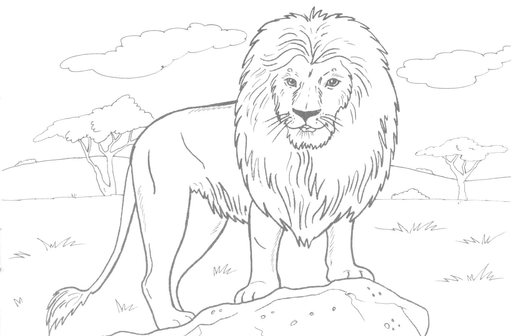 lion face coloring page baby lion coloring pages coloring home face page coloring lion