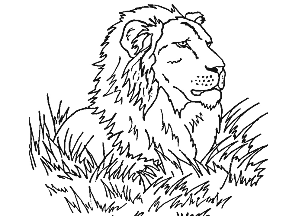 lion face coloring page free download lion face drawing simple clipart lion lion lion coloring page face
