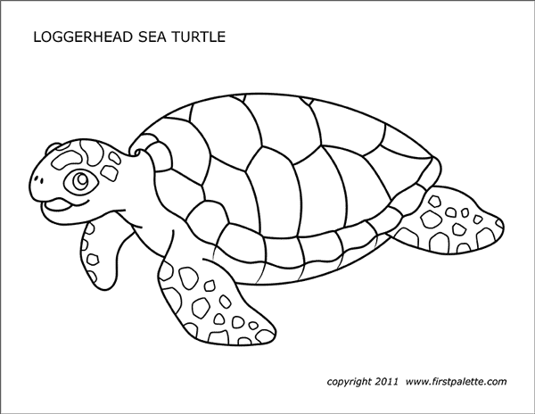 loggerhead turtle coloring page facts discovery sea turtle exploration loggerhead coloring page turtle