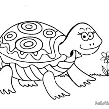 loggerhead turtle coloring page sea turtles free printable templates coloring pages loggerhead turtle coloring page
