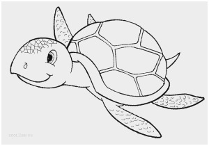 loggerhead turtle coloring page the best free loggerhead drawing images download from 64 loggerhead turtle page coloring