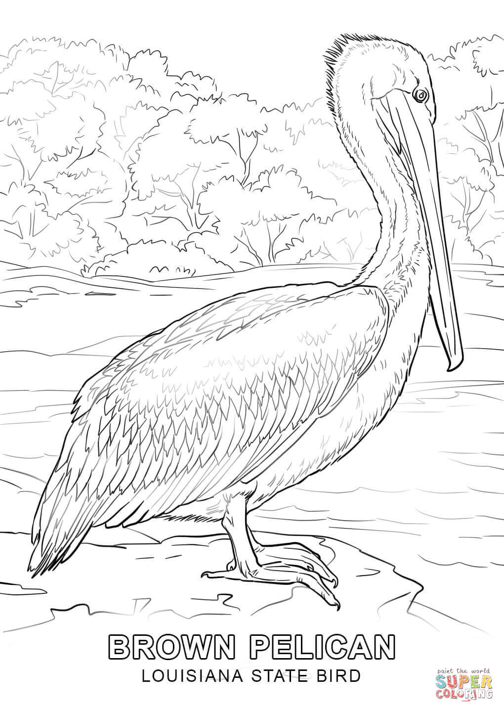 louisiana state symbols coloring pages louisiana state symbols coloring pages coloring home symbols louisiana state pages coloring