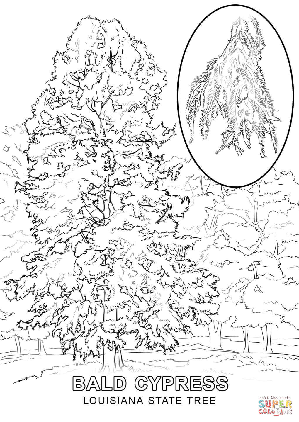louisiana state symbols coloring pages louisiana state tree coloring page free printable symbols coloring pages louisiana state