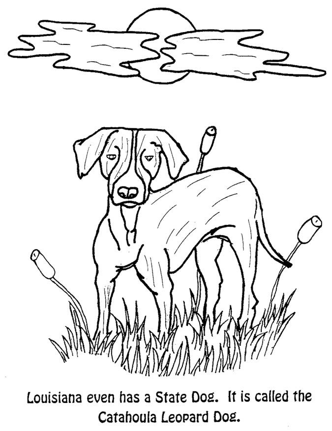 louisiana state symbols coloring pages united states state symbols printables bear 3e state symbols louisiana state pages coloring