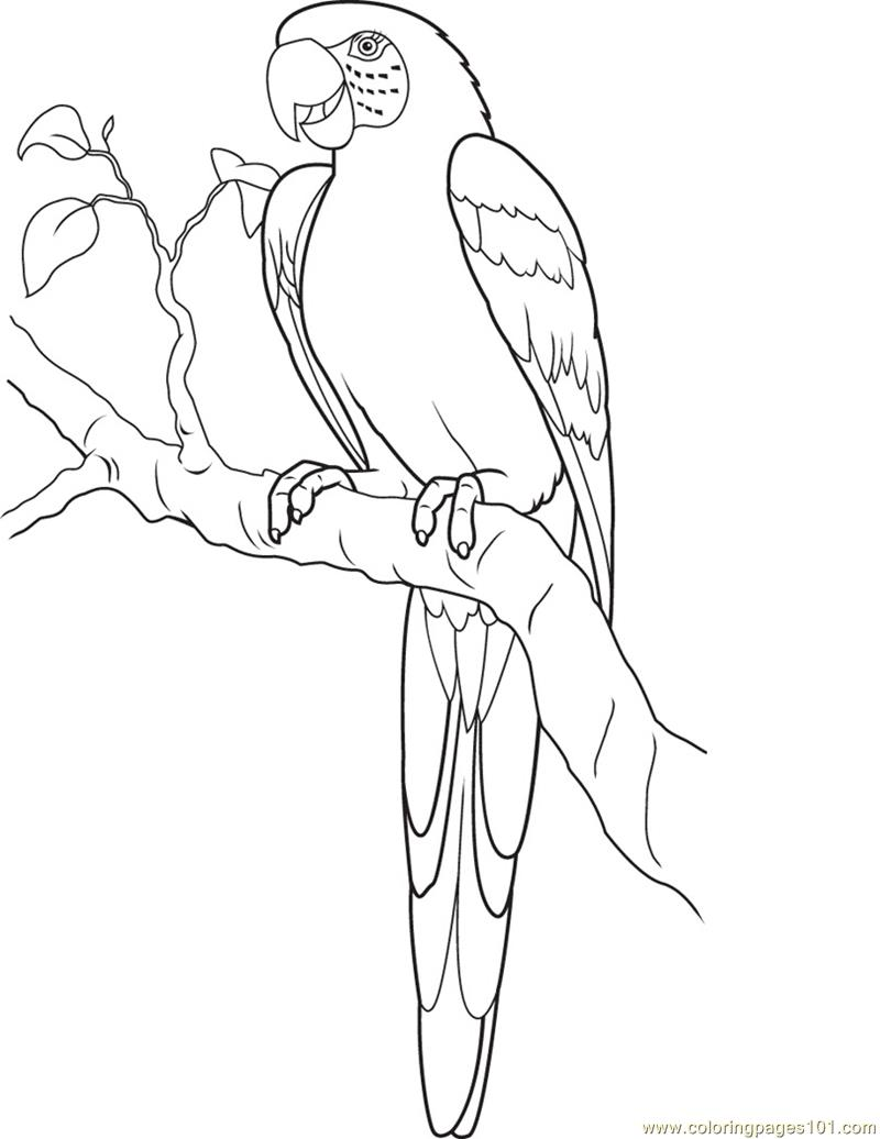macaw bird coloring page baby parrot coloring page download print online page coloring macaw bird