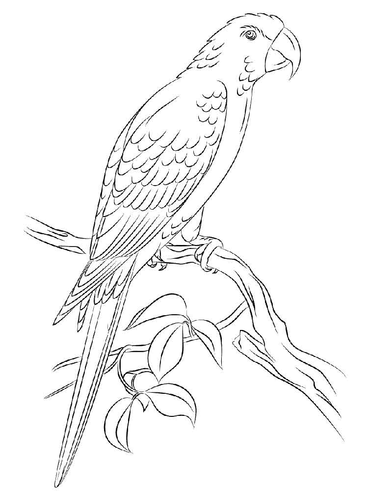 macaw bird coloring page free parrot and macaw coloring pages coloring page bird macaw