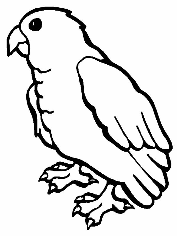 macaw bird coloring page little parrot coloring page download print online coloring macaw page bird