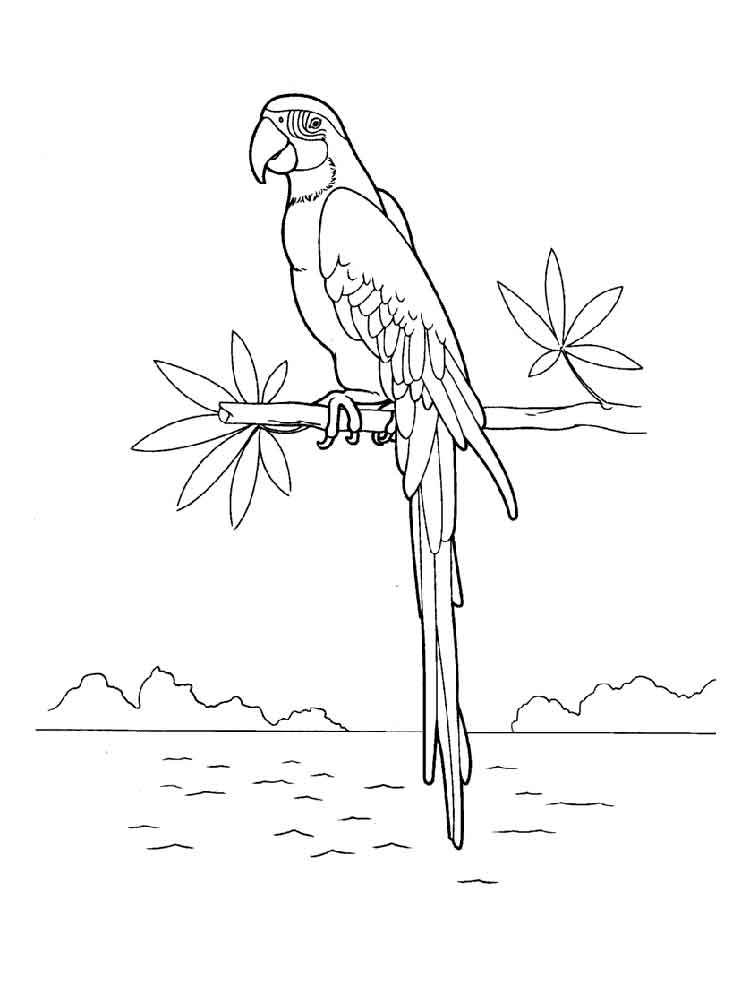 macaw bird coloring page macaw coloring pages download and print macaw coloring pages bird coloring page macaw