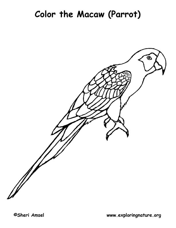 macaw bird coloring page macaw coloring pages download and print macaw coloring pages bird page macaw coloring
