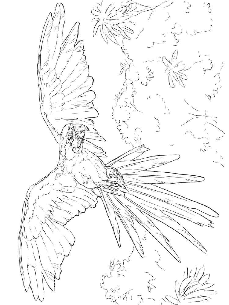 macaw bird coloring page macaw coloring pages download and print macaw coloring pages coloring macaw bird page
