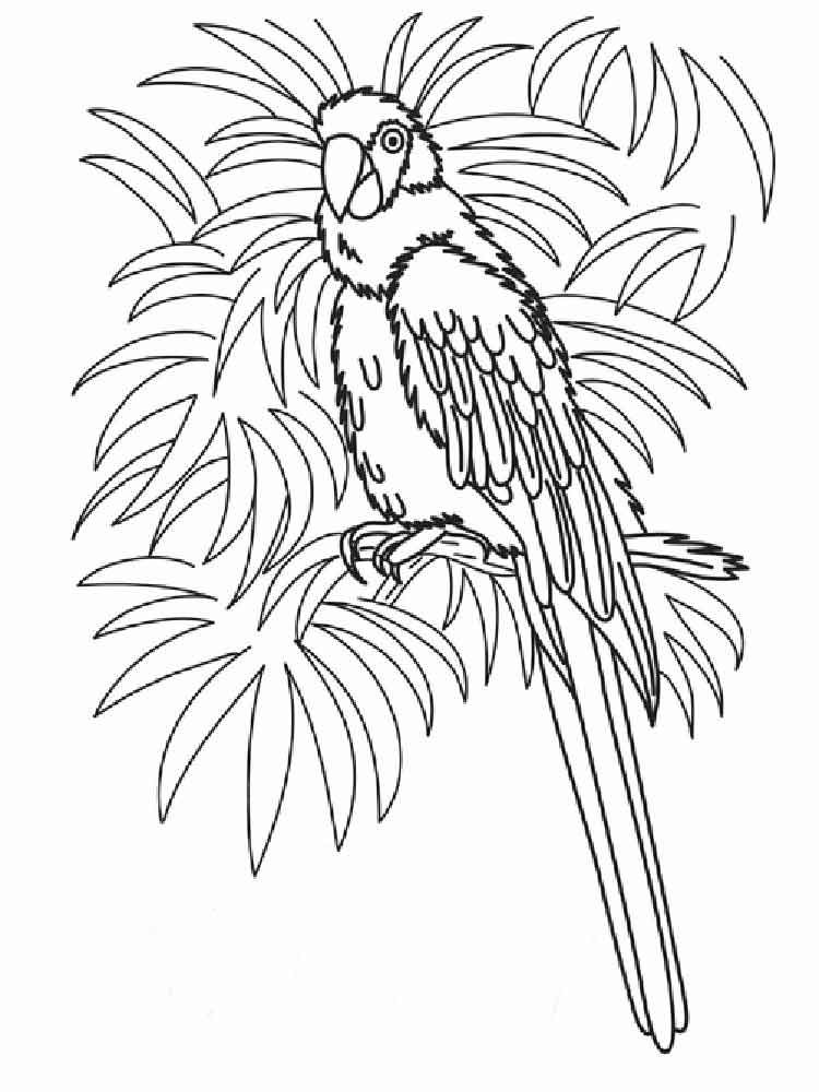 macaw bird coloring page macaw coloring pages download and print macaw coloring pages page bird coloring macaw