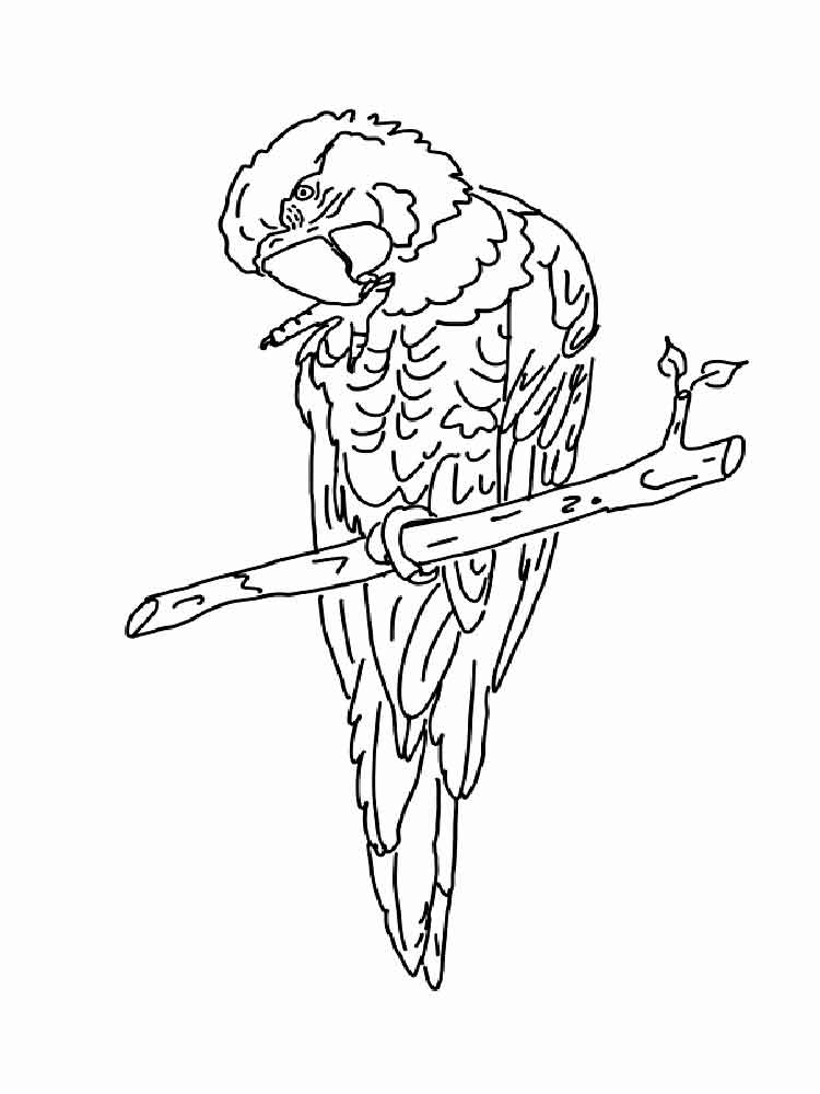 macaw bird coloring page macaw parrot coloring page page macaw bird coloring