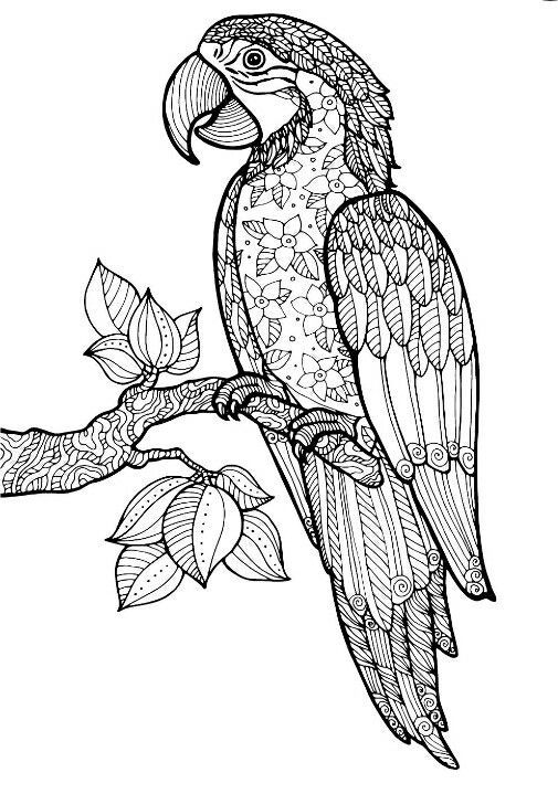 macaw bird coloring page macaw parrot coloring pages animal coloring book pages page macaw bird coloring