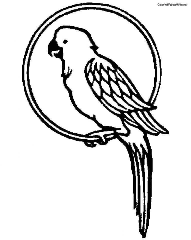 macaw bird coloring page parrot animals coloring pages best coloring pages for kids coloring macaw bird page