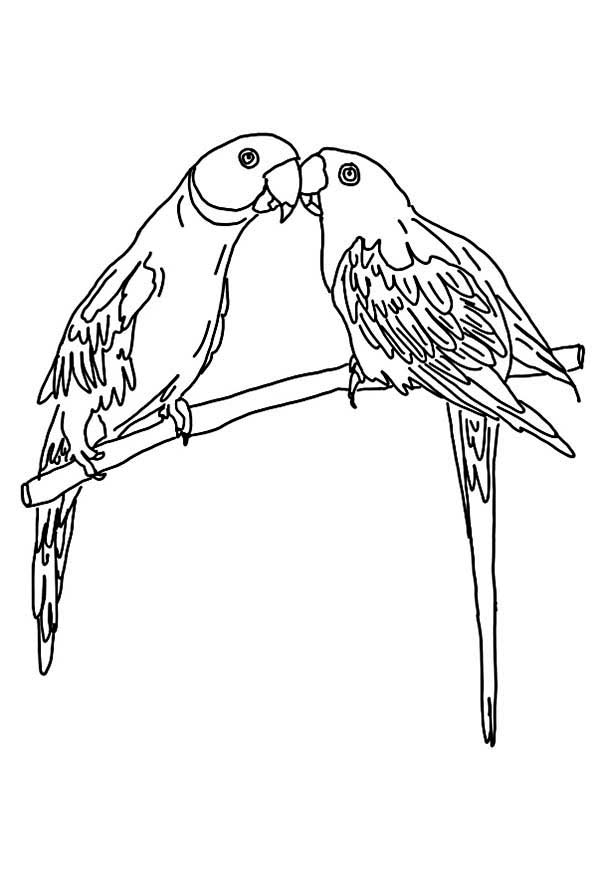 macaw bird coloring page parrot coloring pages kiddo macaw coloring bird page