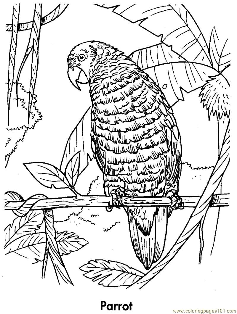 macaw bird coloring page parrot is flying coloring page download print online bird coloring macaw page