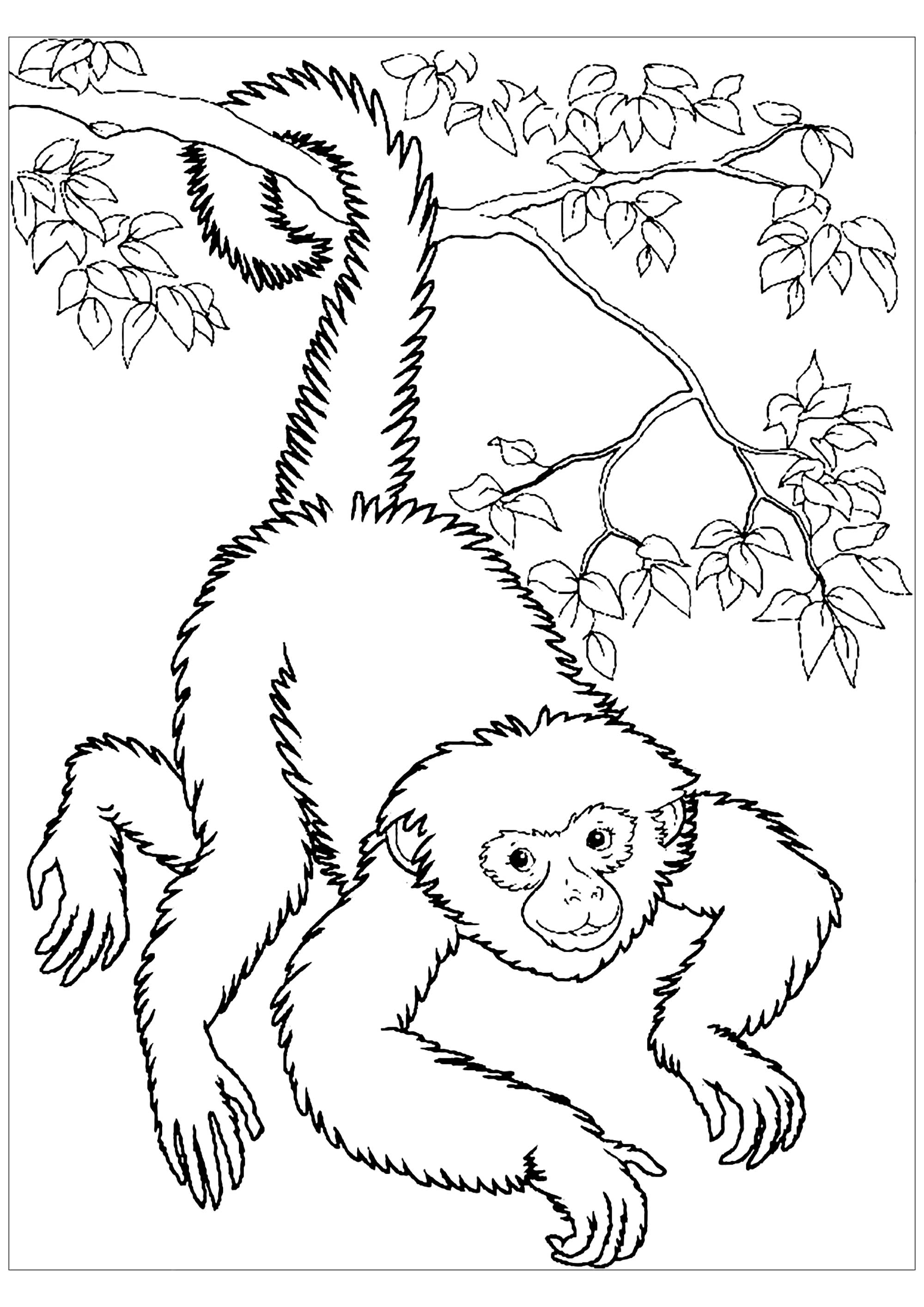 monkey pictures for coloring free monkey coloring pages pictures for monkey coloring