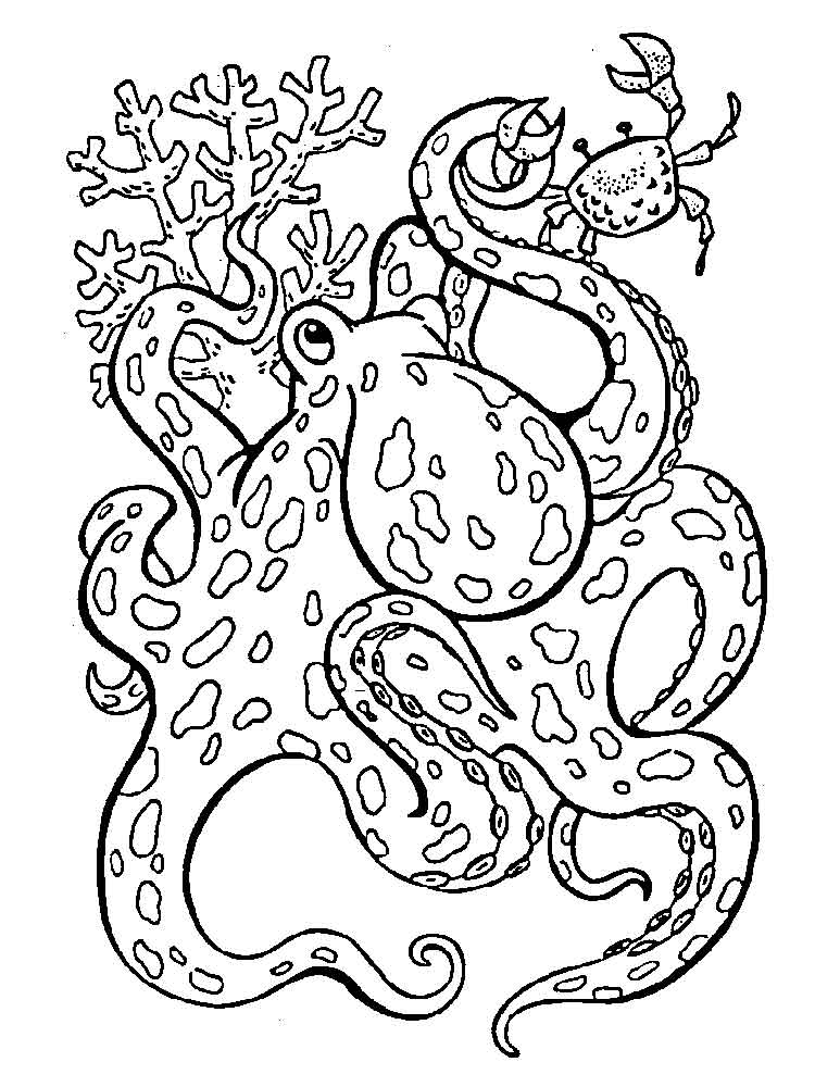 octopus coloring octopus coloring pages download and print octopus coloring octopus