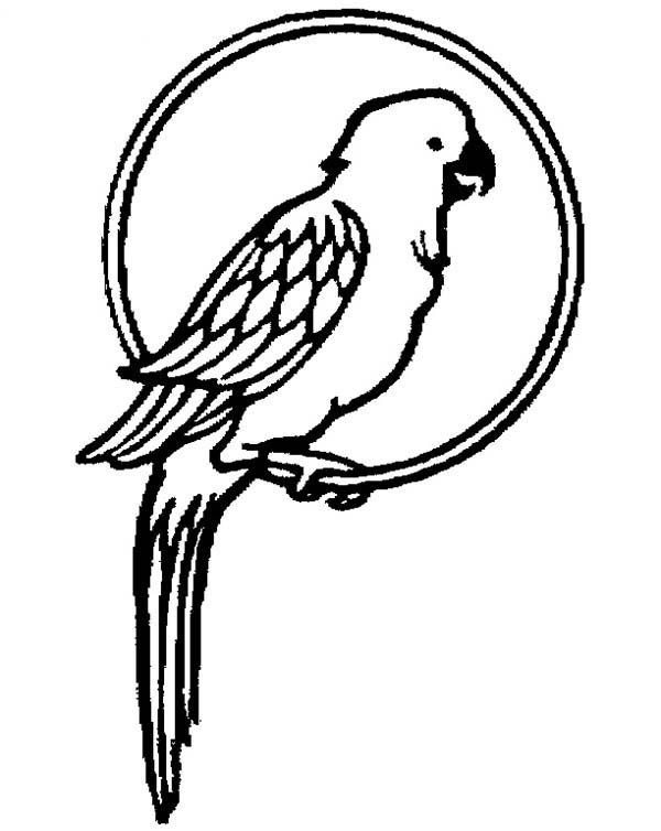 parrot pictures to colour free printable parrot coloring pages for kids to colour parrot pictures