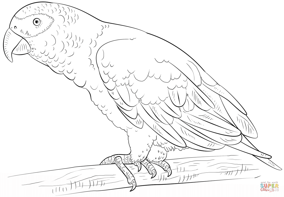 parrot pictures to colour parrot coloring pages download and print parrot coloring colour pictures to parrot