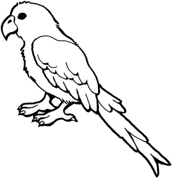 parrot pictures to colour printable parrot coloring pages for kids cool2bkids parrot pictures colour to