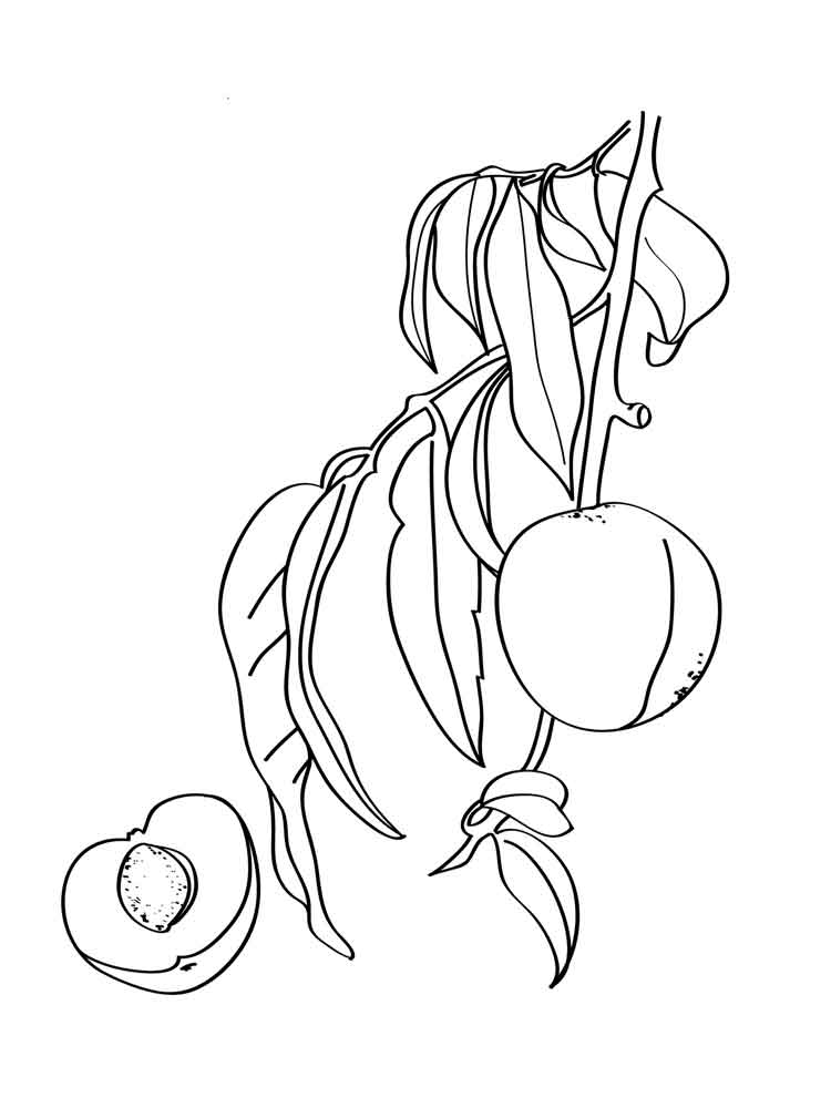 peach coloring pages peach coloring pages coloringall peach coloring pages