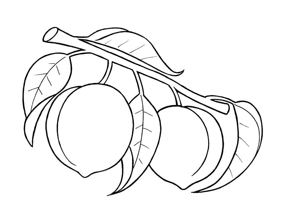 peach coloring pages peaches coloring pages picture learn to coloring pages peach coloring