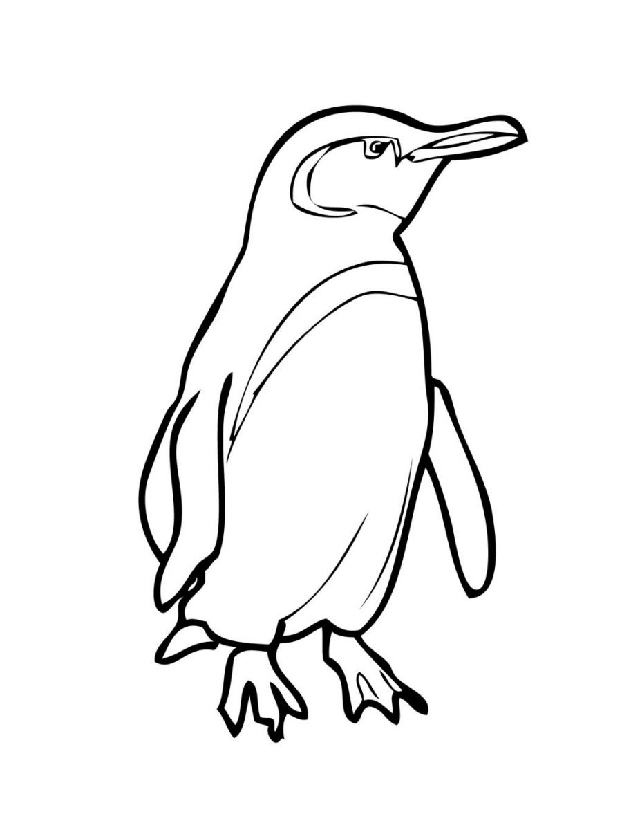 penguins pictures to print printable pictures of penguins free download on clipartmag pictures print to penguins