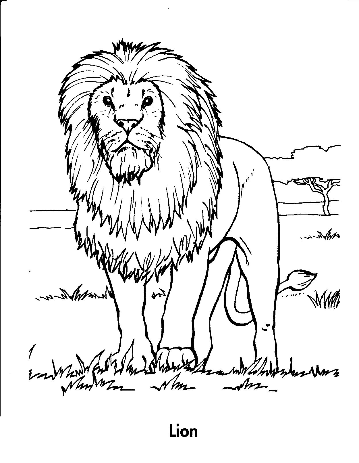 picture of a lion to color lion coloring pages coloring book coloring animals a picture to color lion of
