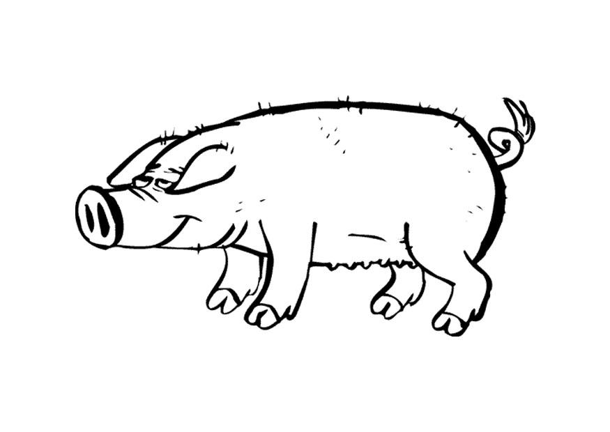 pig pictures to print free printable pig coloring pages for kids pictures pig to print