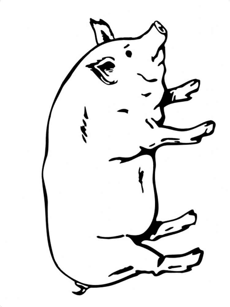 pig pictures to print free printable pig coloring pages for kids print pig to pictures