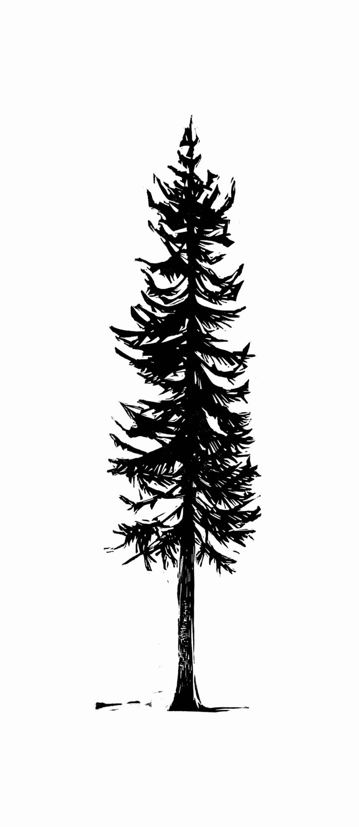 pine tree sketch beccy39s place pine trees pine sketch tree