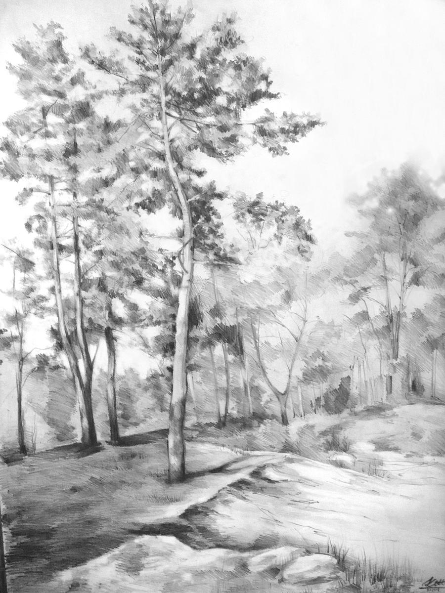 pine tree sketch capture the character of a tree drawing nature joshua pine tree sketch