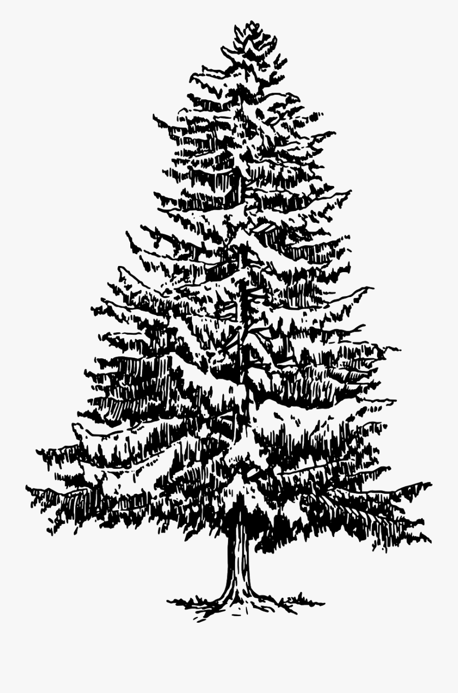 pine tree sketch pin on my art pen and ink tree pine sketch