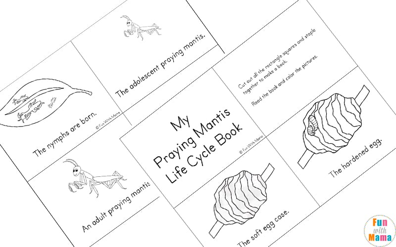 praying mantis life cycle montessori materials life cycle of a praying mantis cards praying cycle mantis life