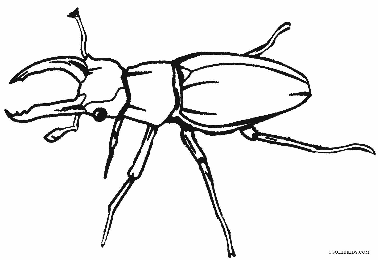 printable bug coloring pages small insect coloring pages to download and print for free bug printable pages coloring