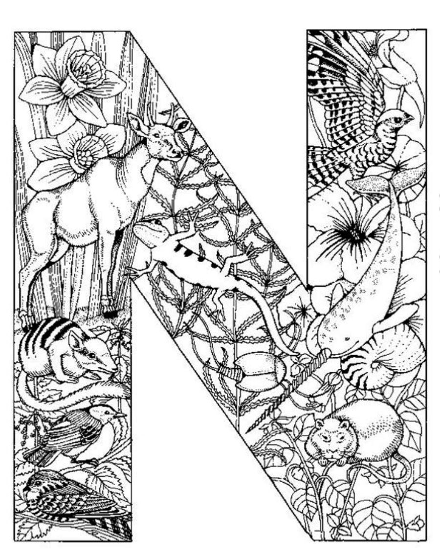 printable detailed coloring pages detailed animal coloring pages timeless miraclecom coloring pages printable detailed