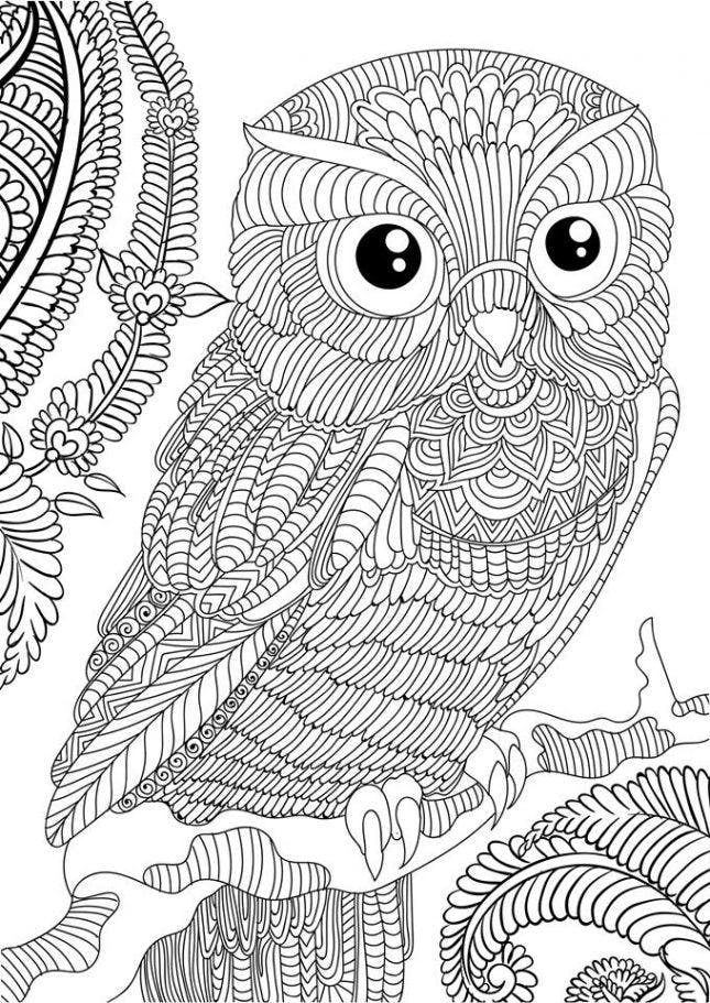printable detailed coloring pages owl coloring pages for adults free detailed owl coloring coloring printable detailed pages