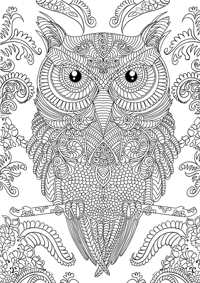 printable detailed coloring pages owl coloring pages for adults free detailed owl coloring printable detailed pages coloring