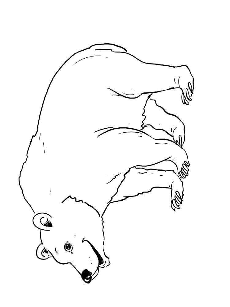pudsey bear colouring pudsey bear free coloring pages pudsey colouring bear