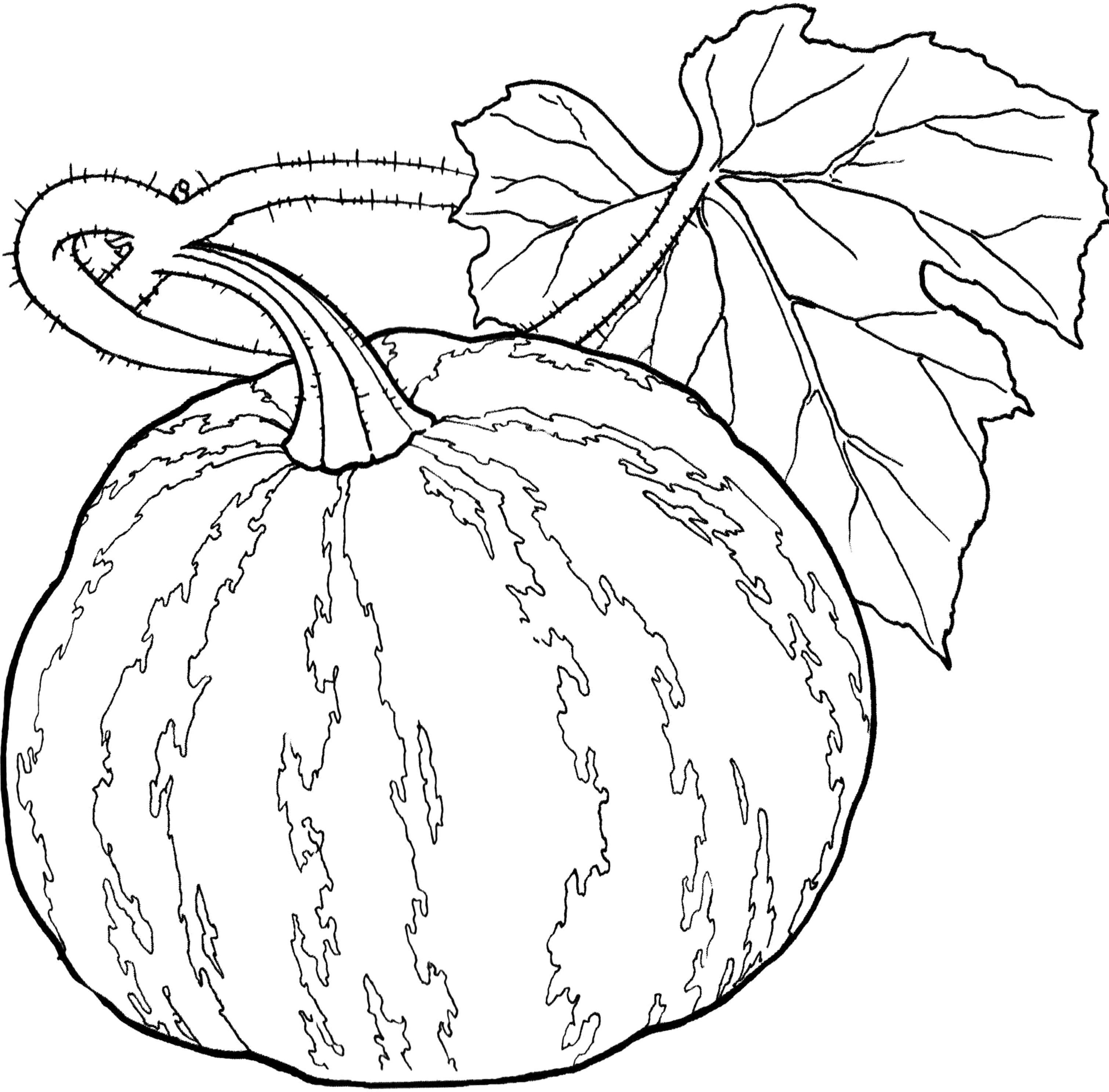 pumpkin and leaves coloring pages pictures vegetables pumpkin and leaves a wide coloring for coloring pumpkin and leaves pages