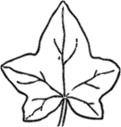 pumpkin and leaves coloring pages pumpkin leaves drawing free download on clipartmag pages leaves coloring and pumpkin