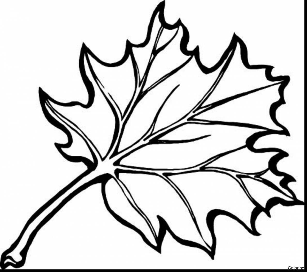 pumpkin and leaves coloring pages pumpkin leaves drawing free download on clipartmag pumpkin and coloring pages leaves